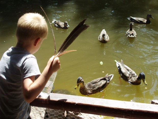 "Photograph ""Child with Ducks"" by Jessica Gleason"