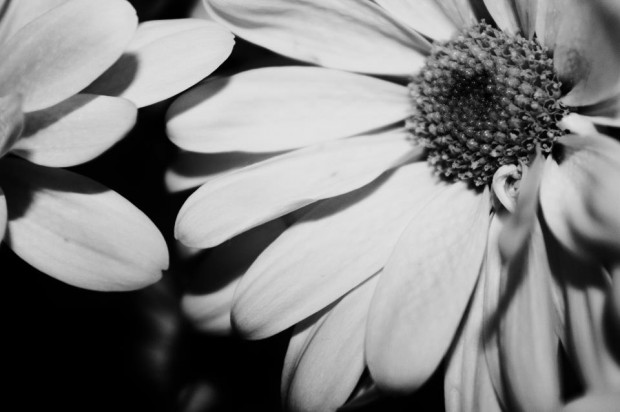 Black and White Flowers, by Rebecca Myers